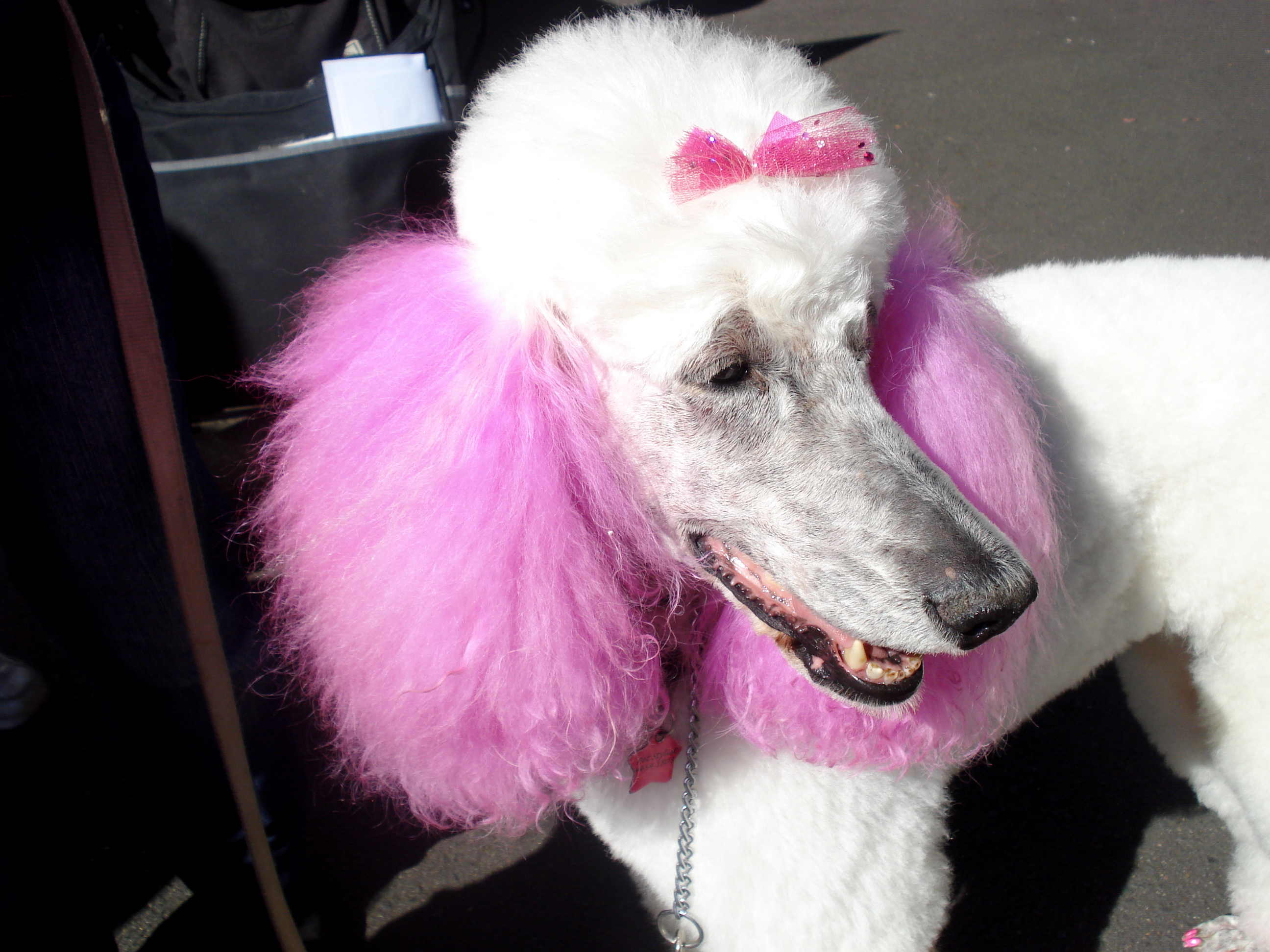 A dog with pink ears