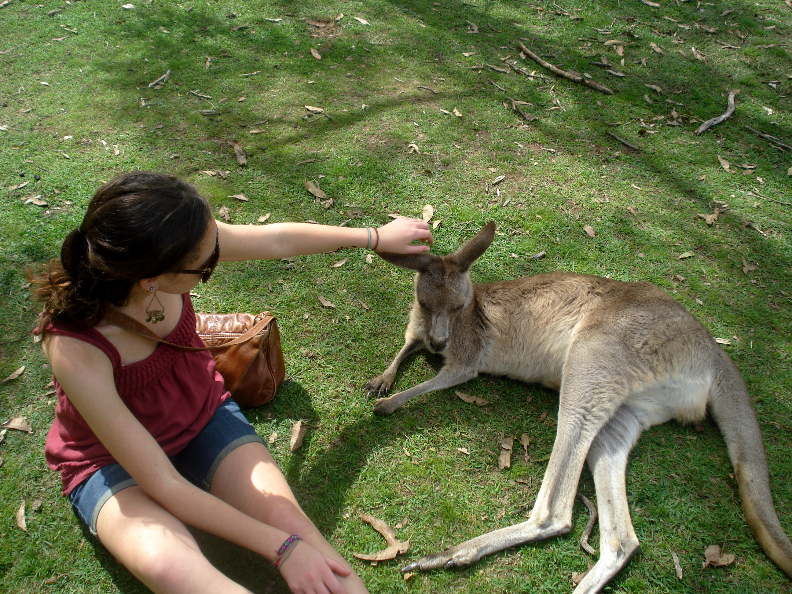Meeting a kangaroo in Brisbane