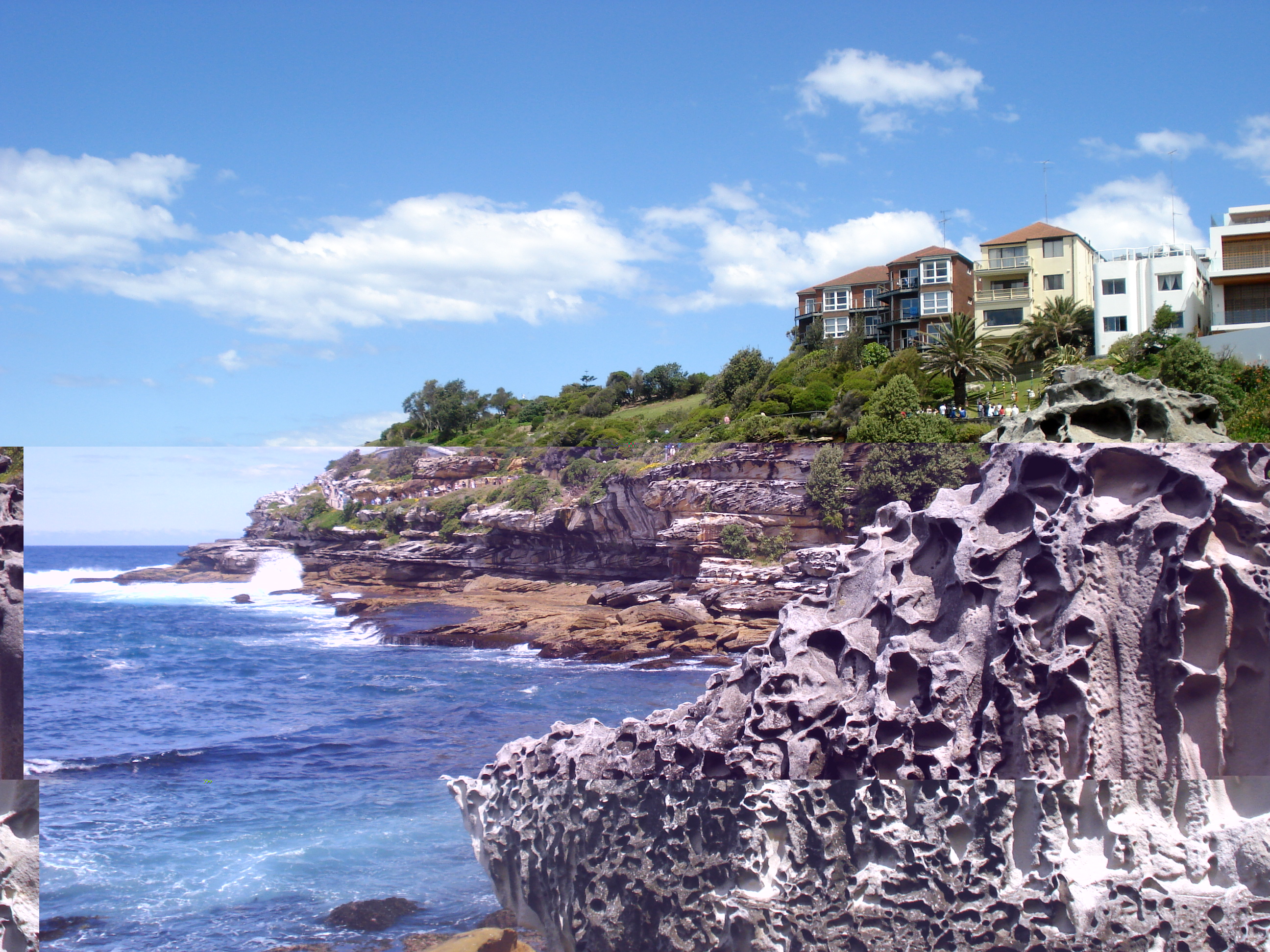 Bondi-Coogee cliffside walk during stuvac