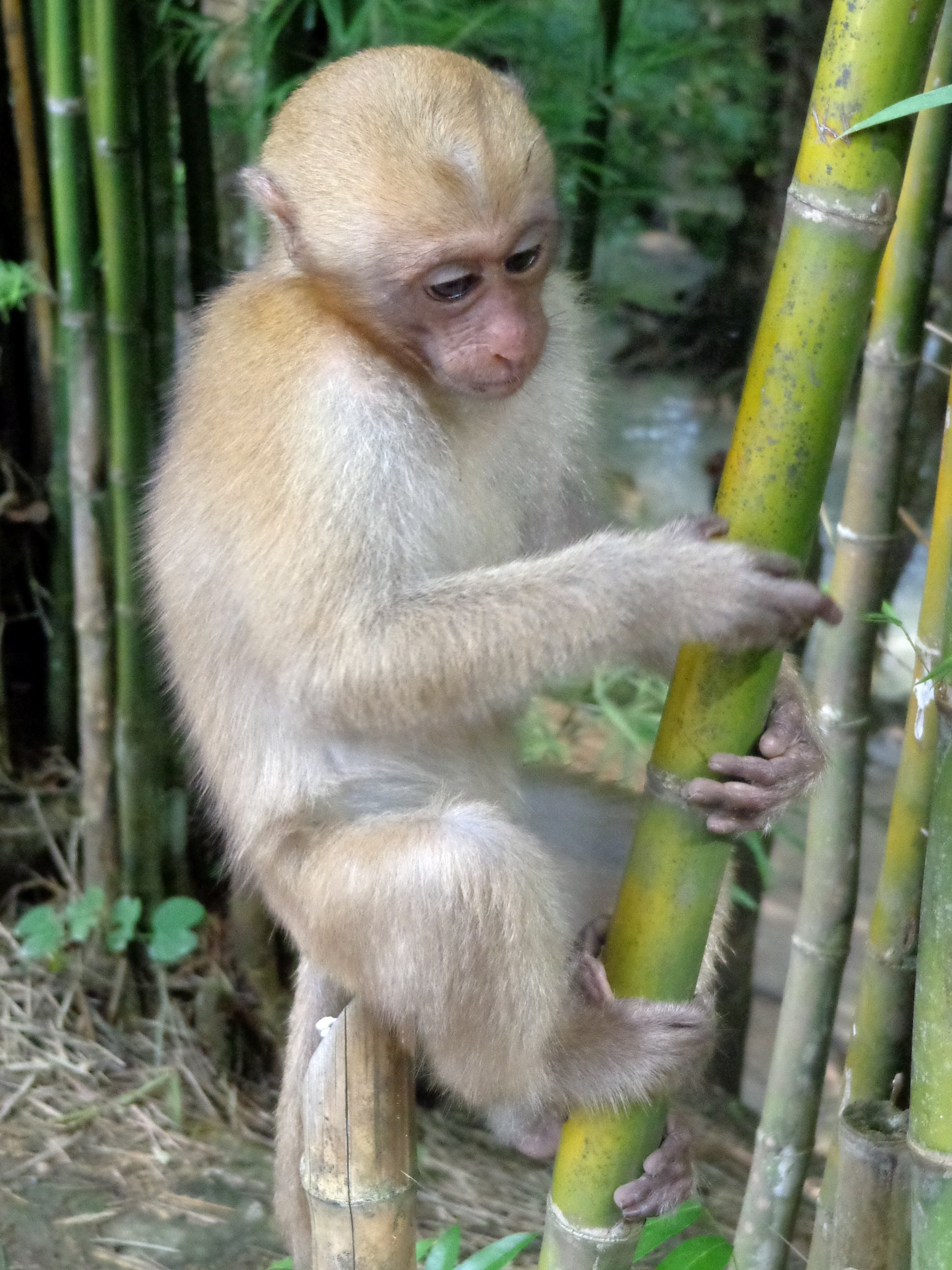 A monkey in Thailand