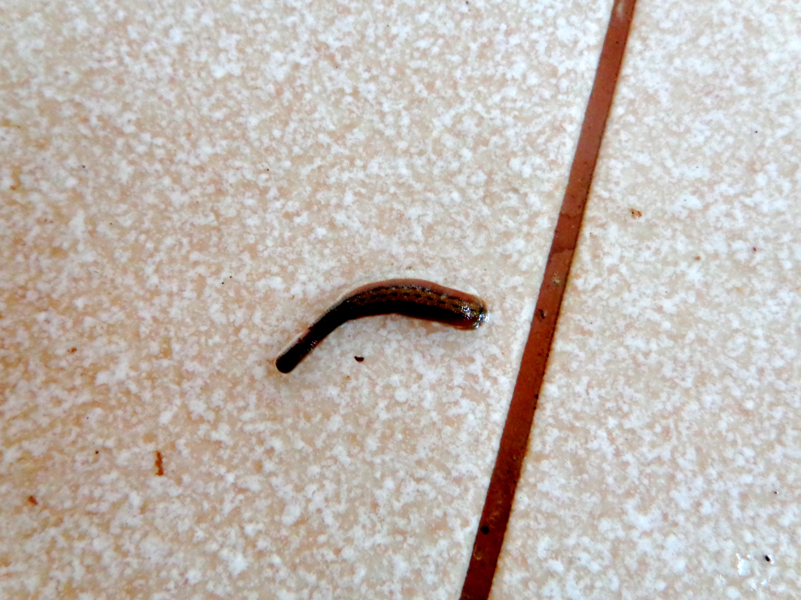 Leeches in Khao Sok National Park