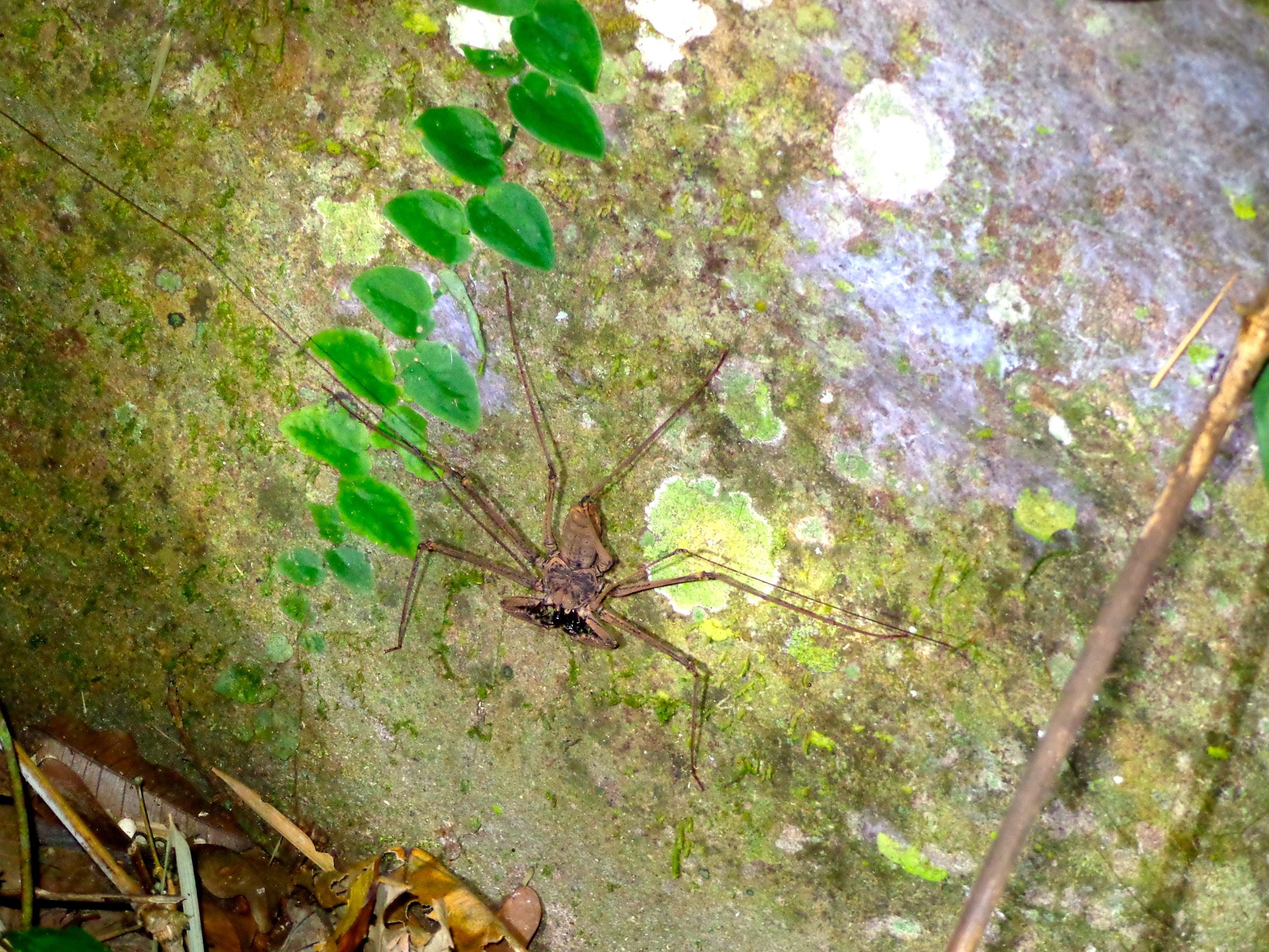 Sleeping outside in the jungle is cool until you find one of these terrifying monster creatures nearby