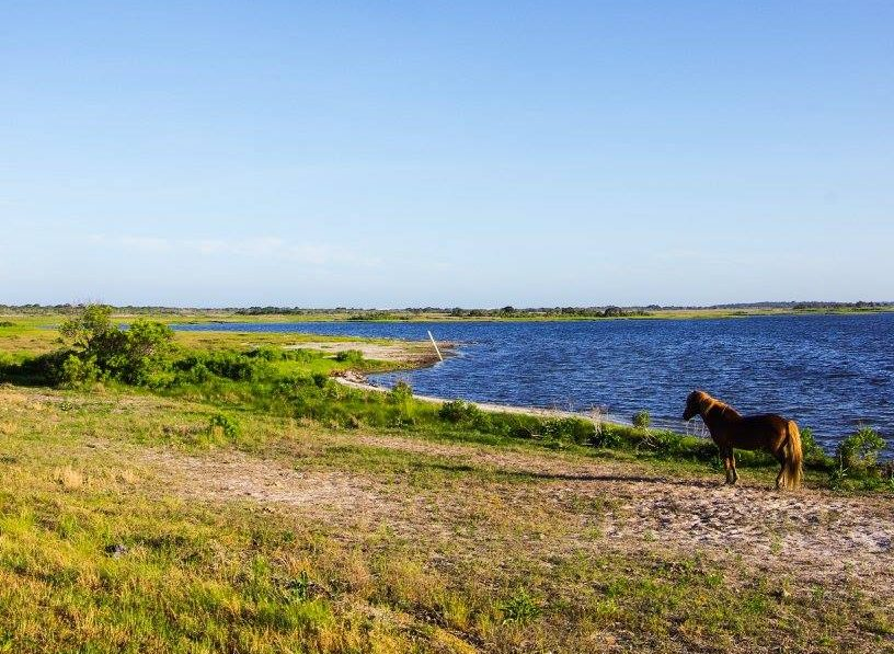 Visit Assateague Island from Baltimore