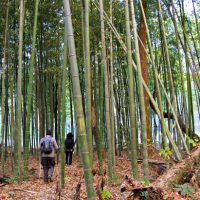 Hiking bamboo forest East Palisades Atlanta