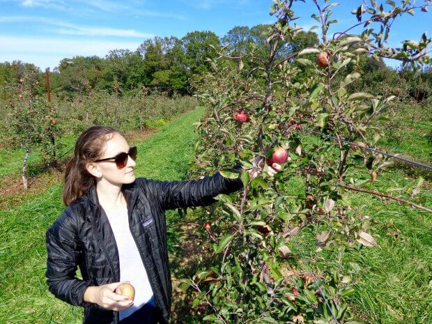 Wearing Nano Puff jacket in Baltimore picking apples