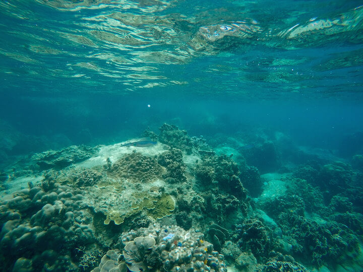 Underwater snorkeling in Koh Tao, Thailand