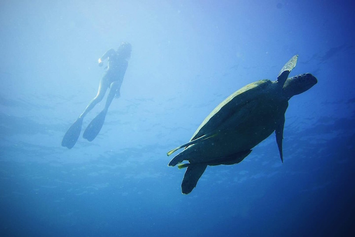 Freediver silhouette and sea turtle in Shark Bay, Koh Tao