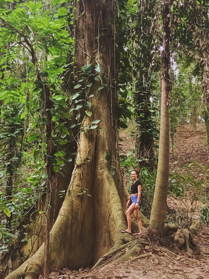 Girl standing near big tree in Udawattekele Nature Sanctuary in Sri Lanka